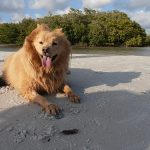 An Afternoon at the Dog Beach in Bonita Springs, Florida