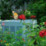 Butterfly Garden Photography