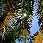Captiva Island: Florida's Best Island Getaway
