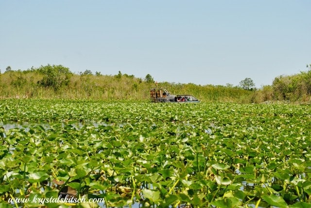 Everglades Holiday Park Airboat Tour