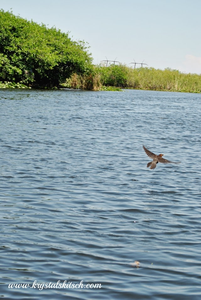 Everglades Holiday Park Airboat Trip