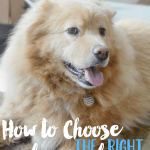 How to Choose the Right Dog Food