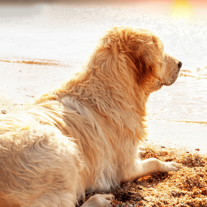 11 Pet Photography Tips