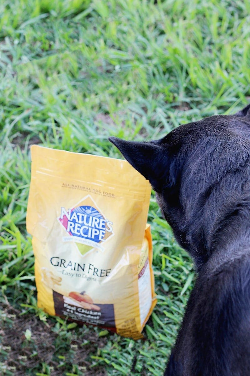 Dog Food That S A Little Softer