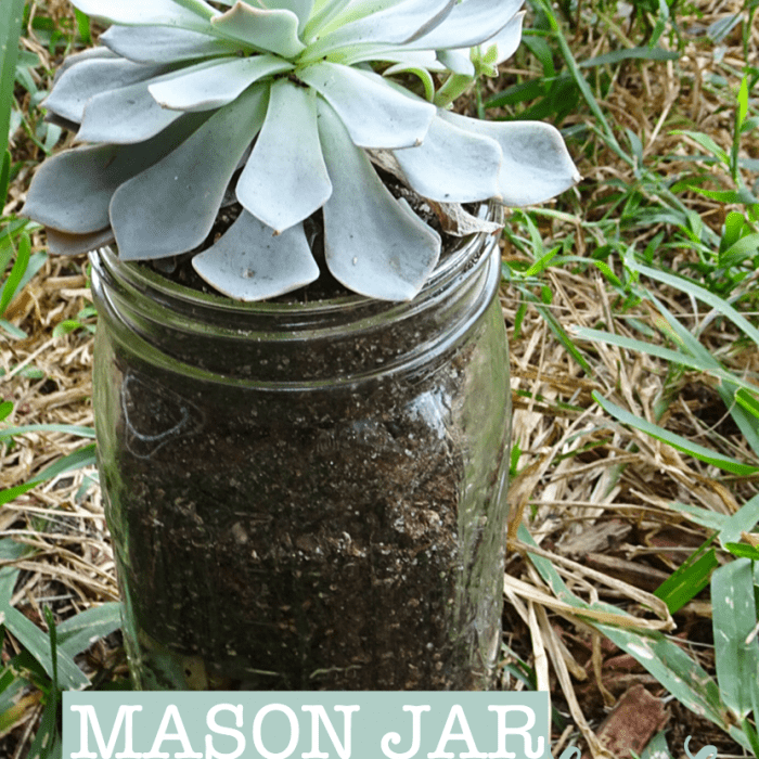 How to Add Color to Your Home: DIY Mason Jar Succulents