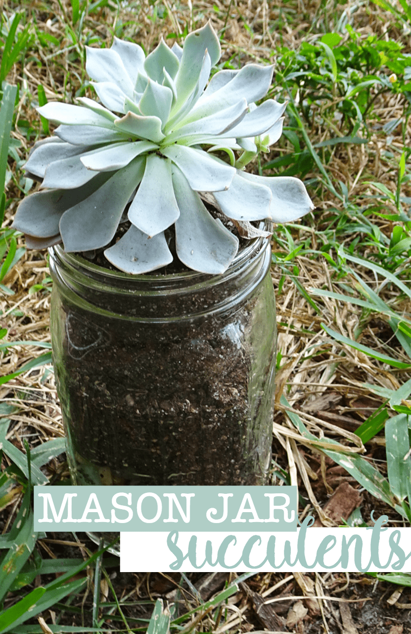 DIY Mason Jar Succulents