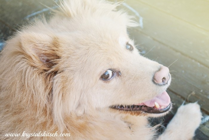 Walgreens Pet Perscriptions #shop #cbias