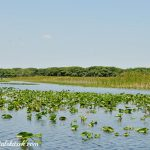 Experience the Florida Everglades at Everglades Holiday Park