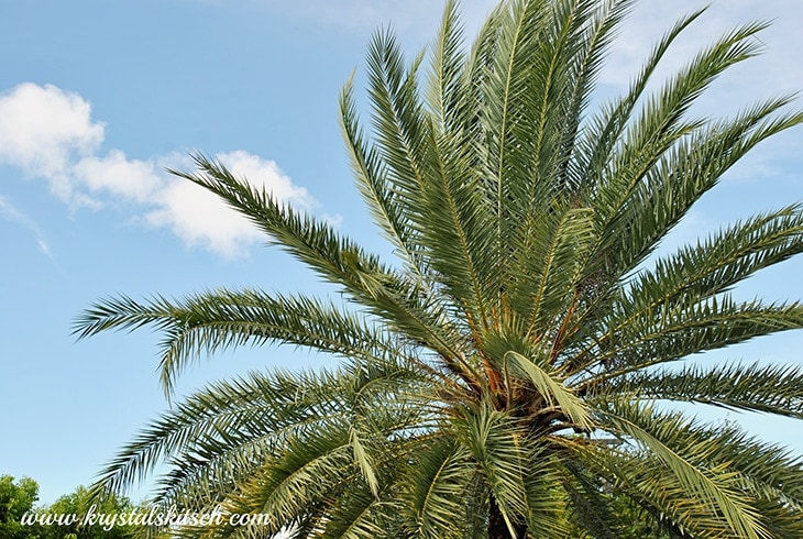 Outback Steakhouse Cape Coral