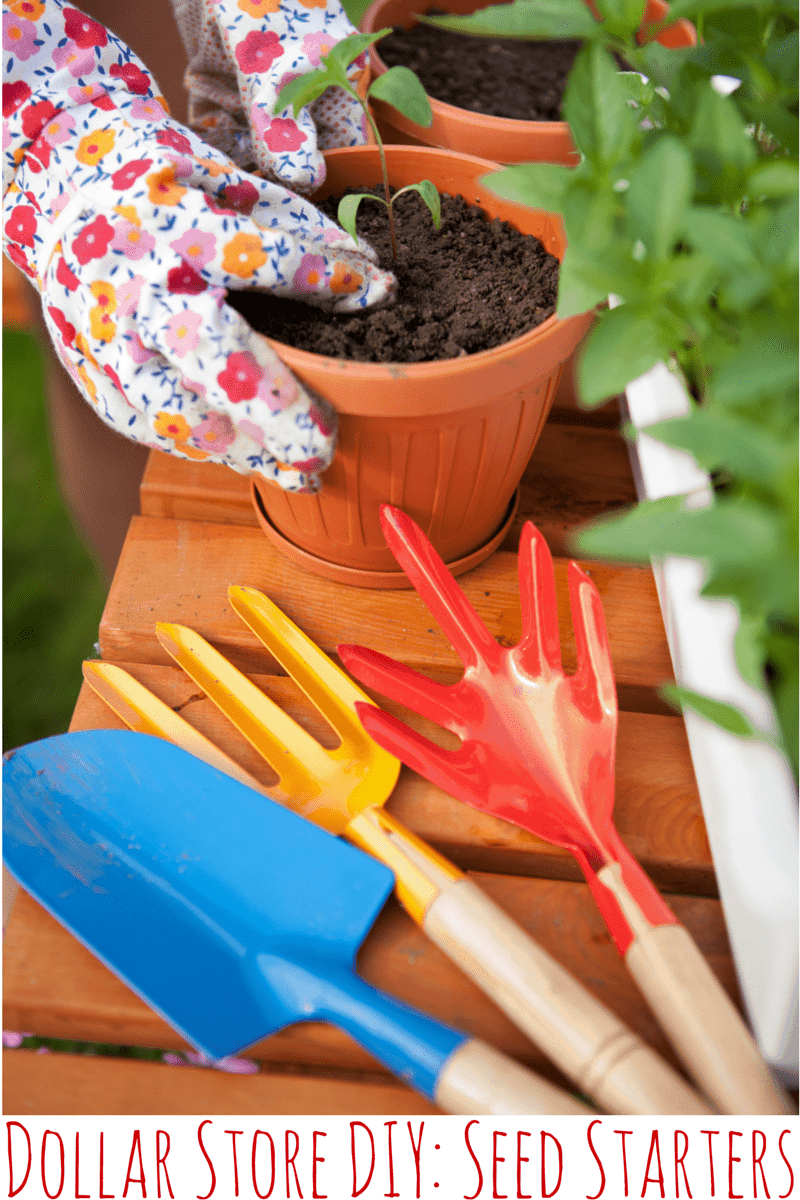 Dollar Tree DIY: Create Your Own Seed Starters