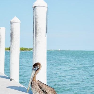 Beach, Bait, and Bliss: Your Florida Weekend Getaway Awaits