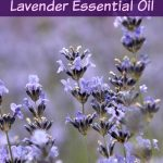 5 Ways to Relax With Lavender Essential Oil