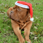 11 Awesome Pet Gift Ideas