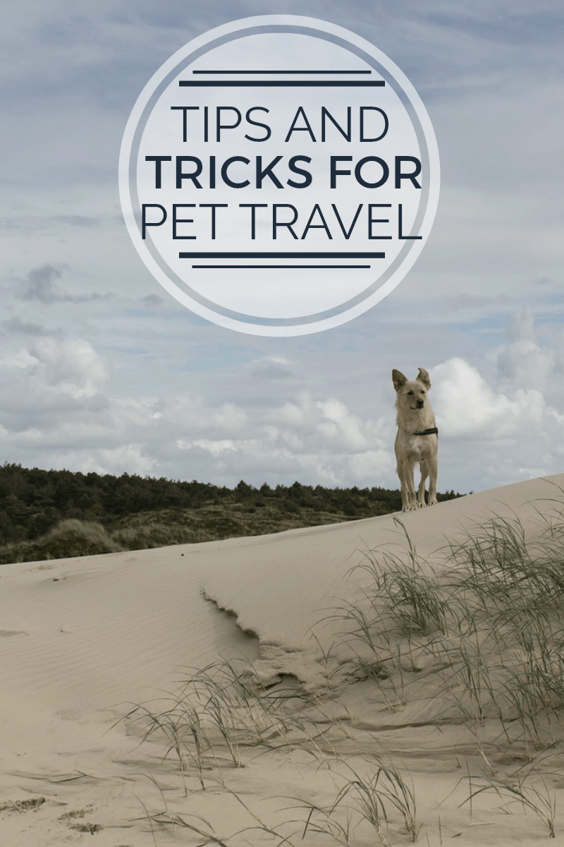 Pet Travel Tips For Adopted Pets