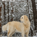 Winter Pet Tips