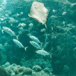 How to Make $160 Go Far | Florida Aquarium Membership