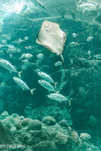 Aquarium Memberships