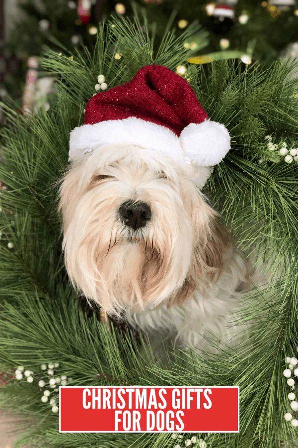 Awesome Pet Gift Ideas: Christmas Gifts For Dogs