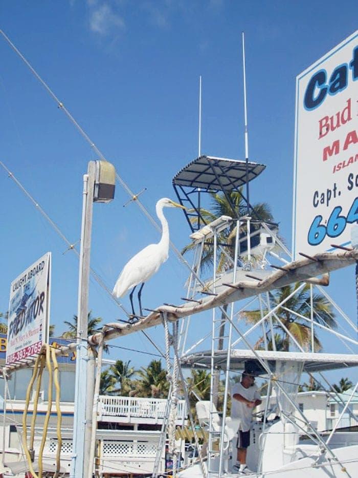 Deep Sea Fishing in Florida