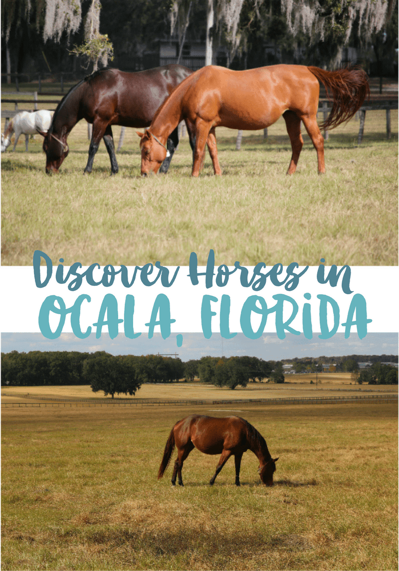 Horsing Around in Ocala-Marion County