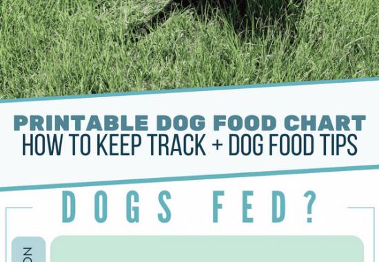 Dog Food Printable Reminder Chart