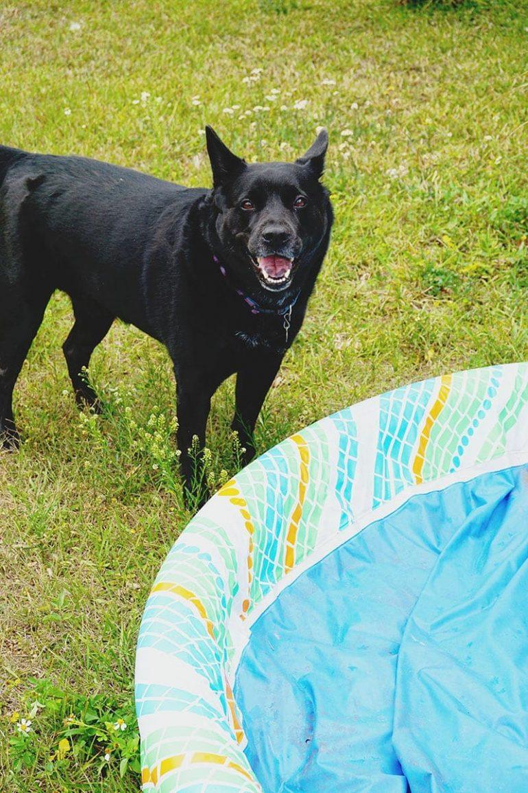 Dog Park Ideas With Purina