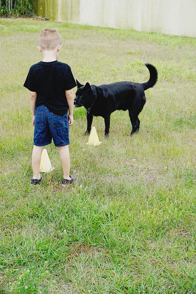 Dog Park Ideas With Purina