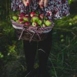 Fall Bucket List: Go Apple Picking