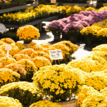 Everything You Ever Wanted to Know About Fall Bulbs | Fall Gardening Tips