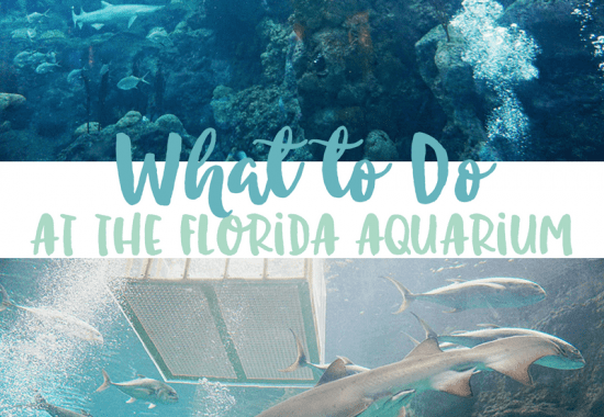 Why the Florida Aquarium in Tampa, Florida is a Must-See Attraction