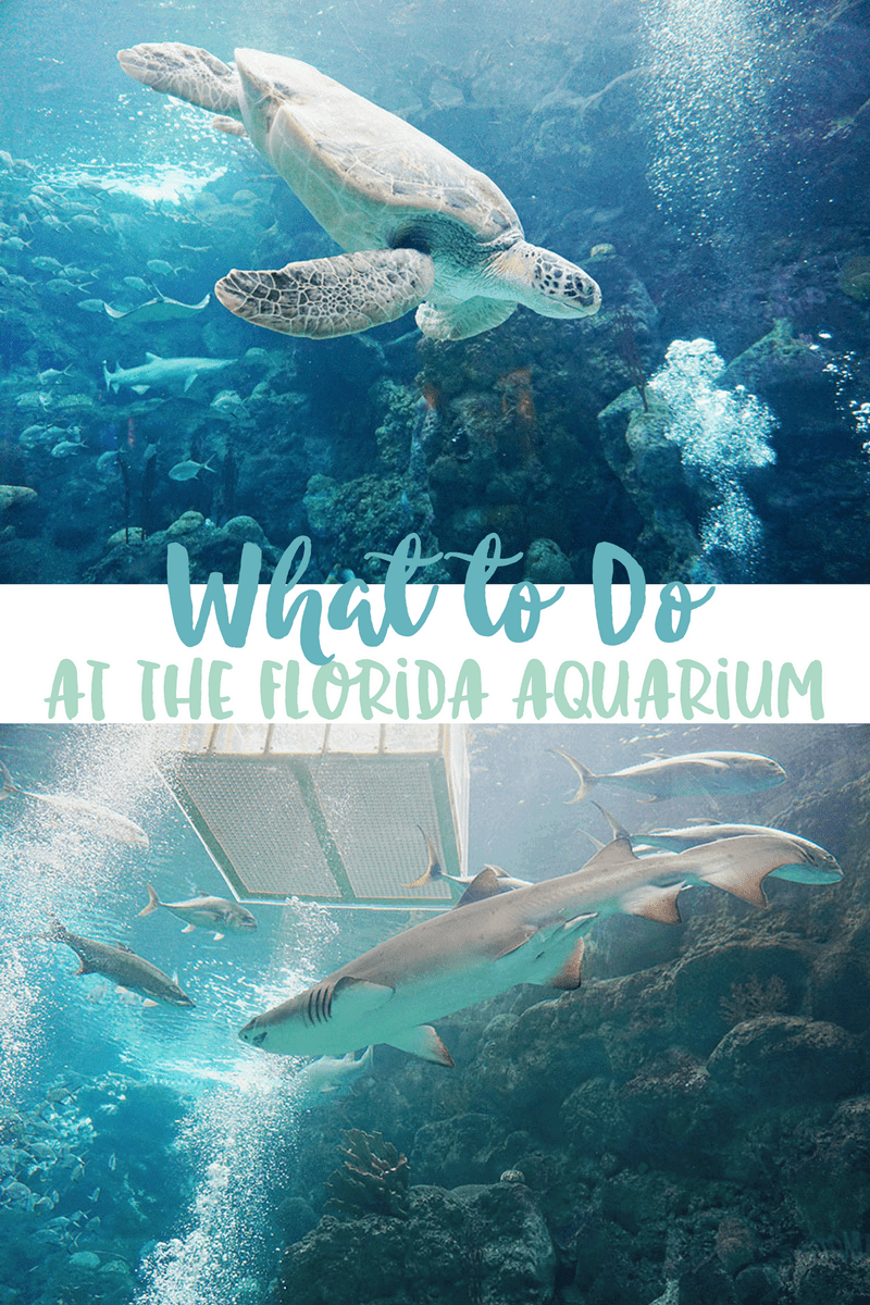 Florida Aquarium in Tampa, Florida