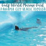 Panama City Beach: Gulf World Marine Park