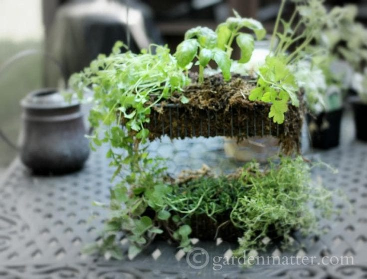 How to Make a Simple Hanging Herb Garden with a Wire Shelf