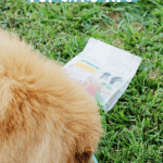 Happy and Healthy Pet Care Tips