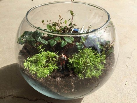How to Make Your Own Star Wars Terrarium!