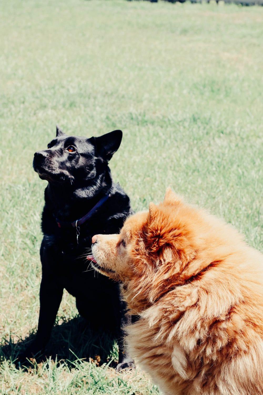 Dog-Friendly Ideas For Summer
