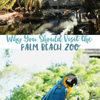 Visit the Palm Beach Zoo in West Palm Beach