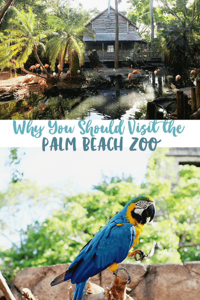 Visit the Palm Beach Zoo in West Palm Beach