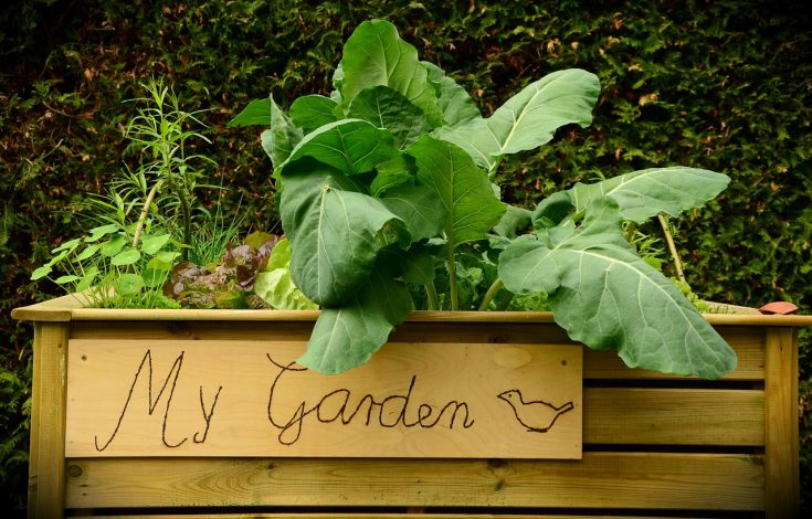 Layered Garden Beds – No dig, no till, Easy Garden Method