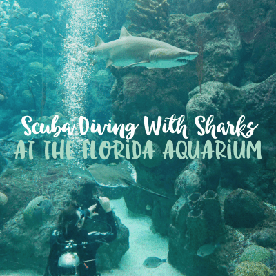 Scuba Diving at the Florida Aquarium in Tampa, Florida