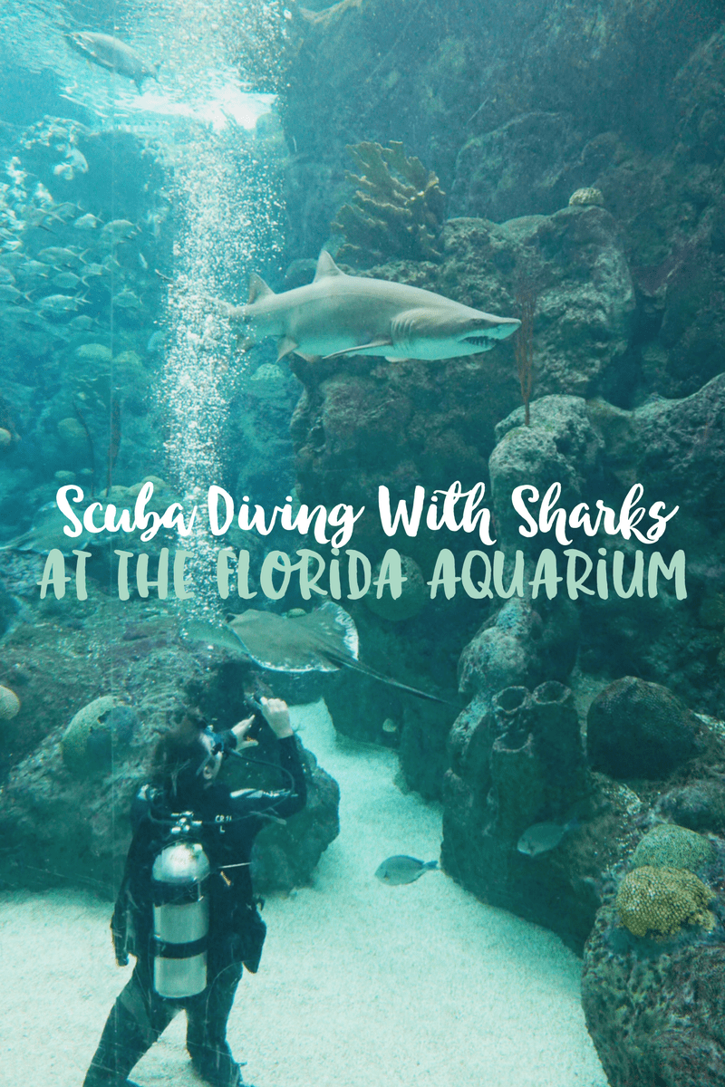 Scuba Diving With Sharks | Florida Aquarium in Tampa, Florida
