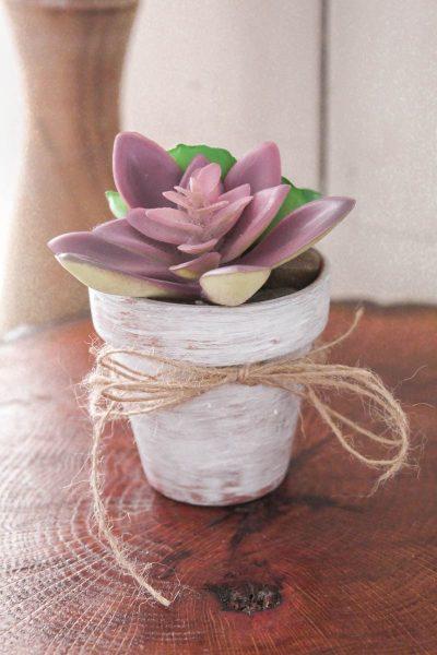 Succulent Craft Ideas