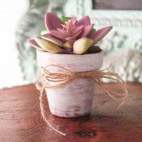 Easy Dollar Tree Succulents Planter DIY
