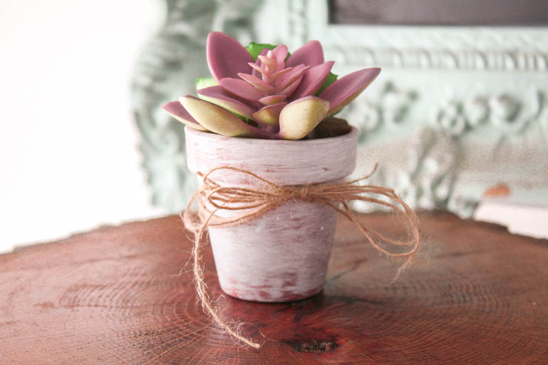 Succulent Craft Ideas