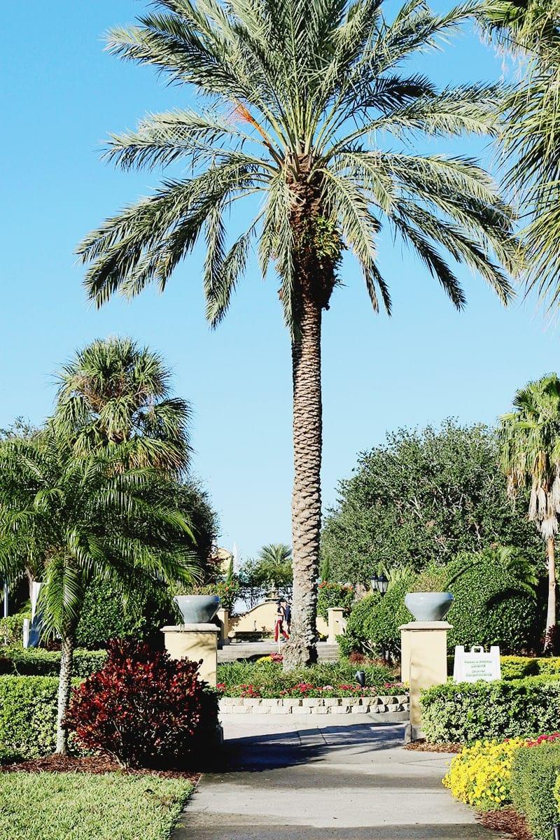 Wyndham Orlando