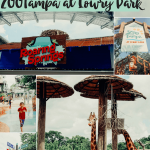 ZooTampa at Lowry Park: Experience Roaring Springs!