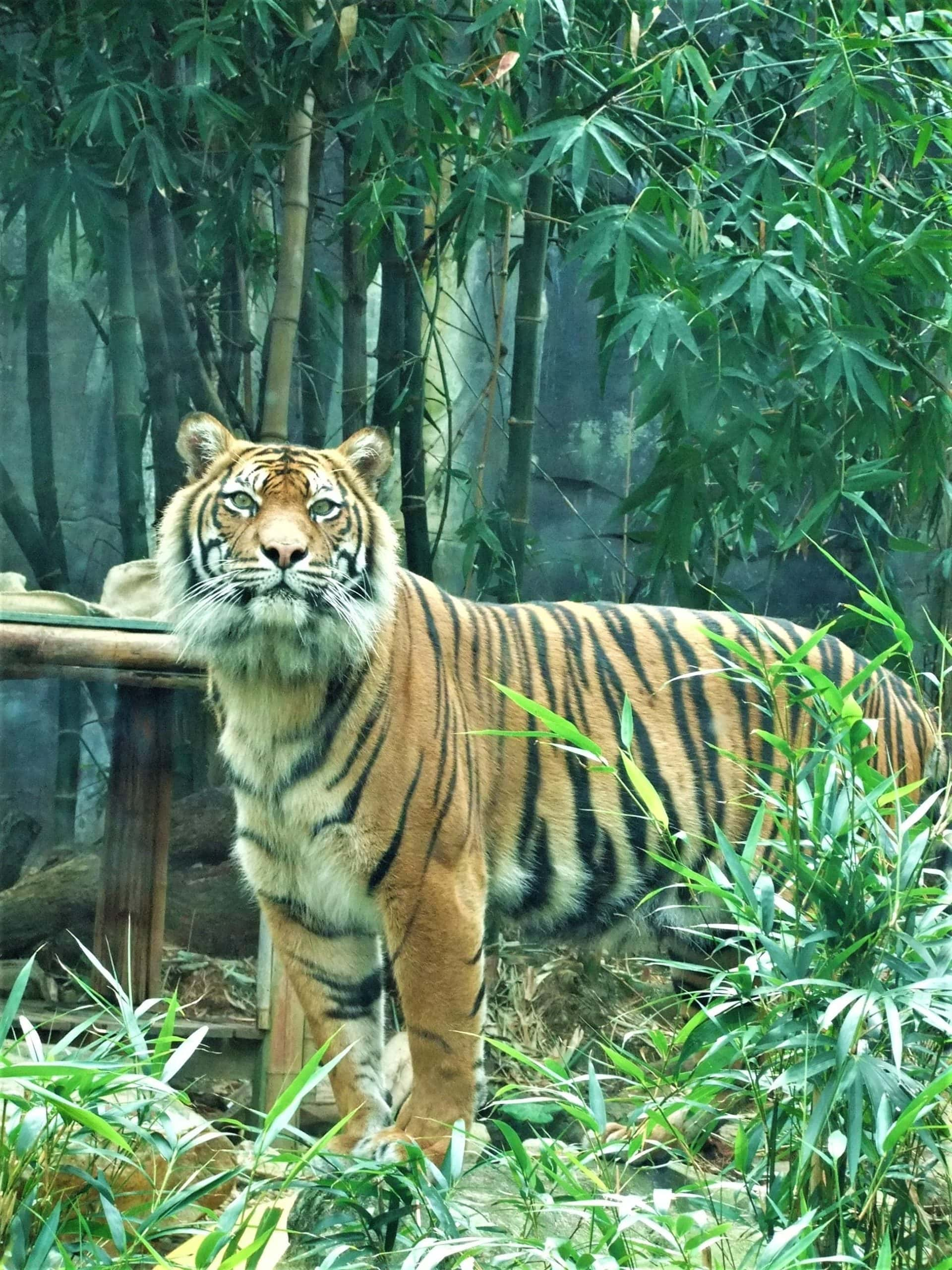"""6 Pandemic Tips to Learn from """"Tiger King"""""""