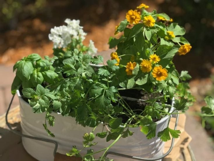 DIY Patio Herb Garden (step by step with pictures)