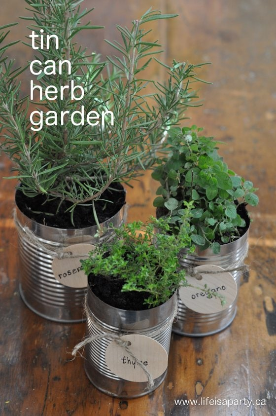 Putting the Garden to Bed and a Tin Can Herb Garden