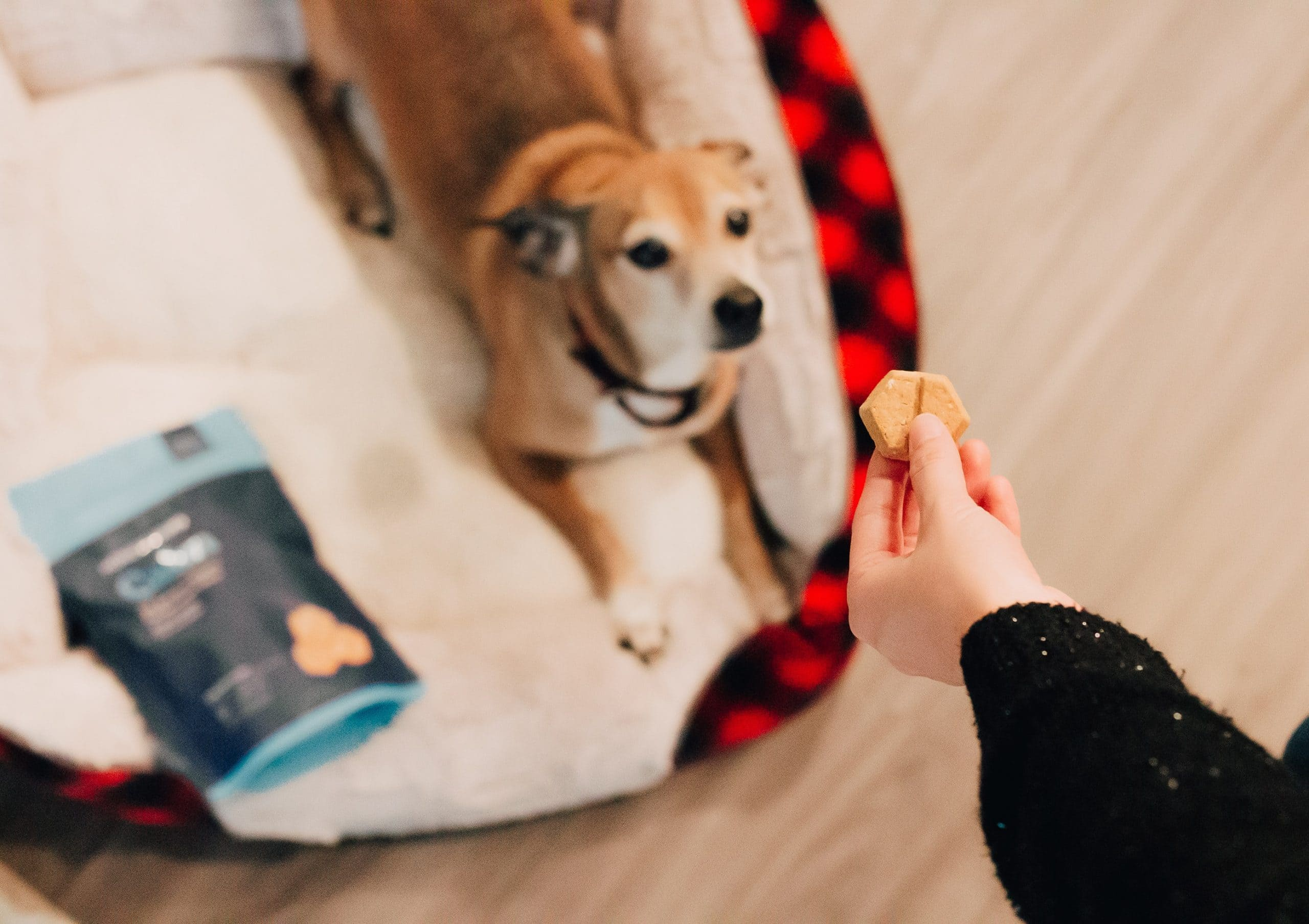 Looking For Best Cookies For Dogs? Here's A Guide